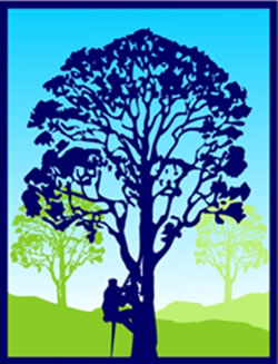 Sapphire Coast Tree Service and Tower Hire logo